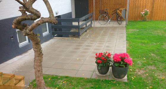 Beskæring af træer, træbeskæring Odense og Fyn